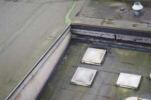 flat roof mold